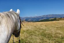 До собствениците на коне и конни бази !